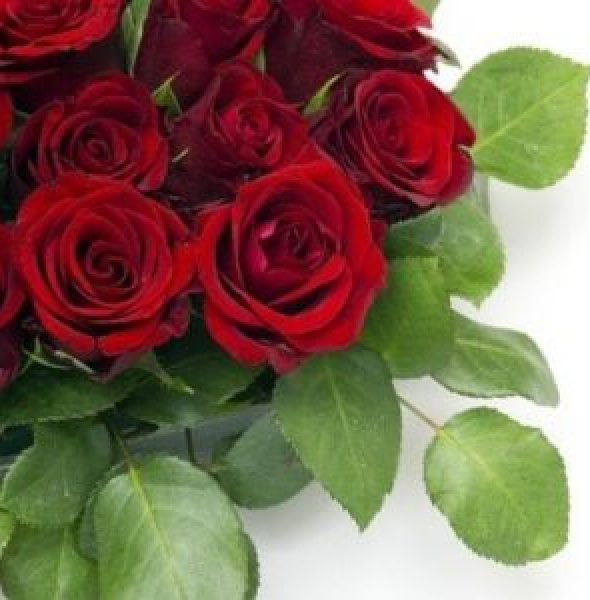 Run for the Roses @ Alexandra Picnic Races